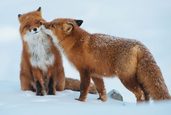 fox-photo-11