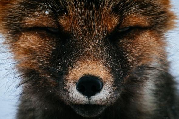 fox-photo-141