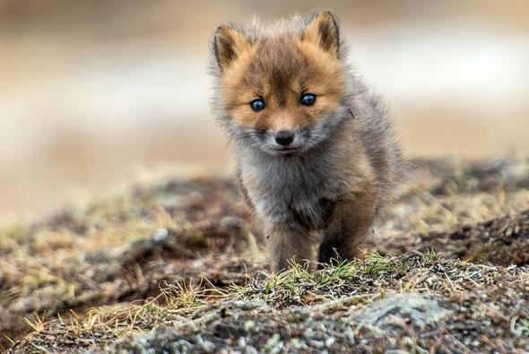 fox-photo-18