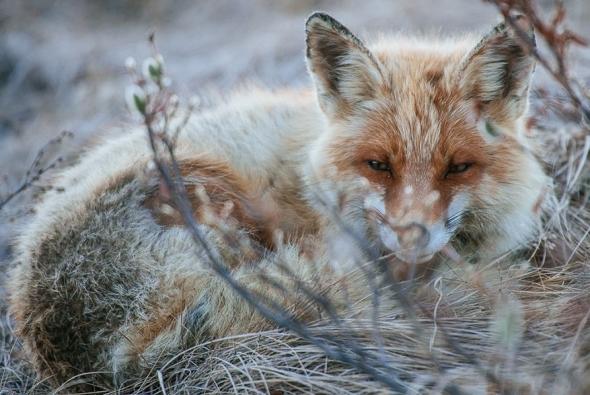 fox-photo-7