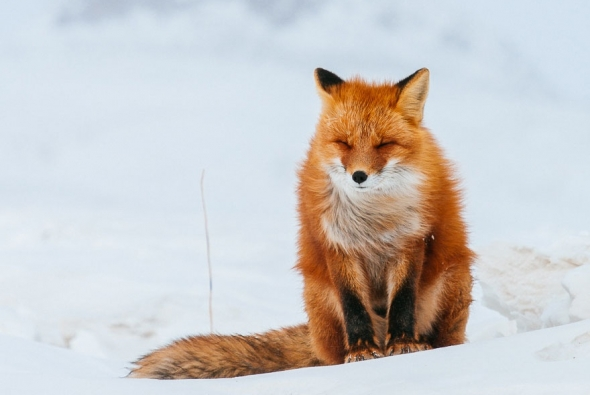 fox-photo-9