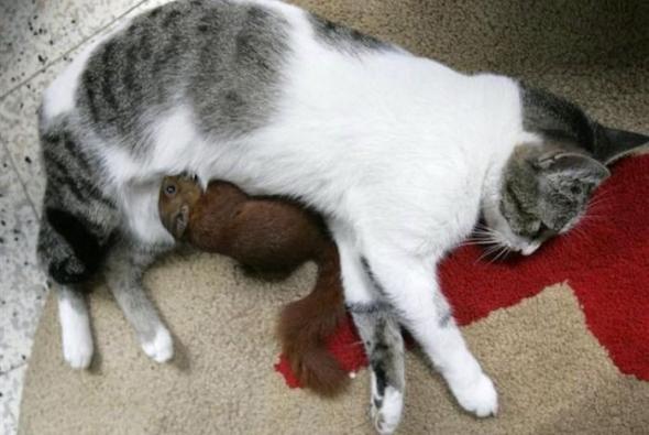 Белка в кошачей семье