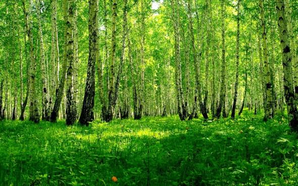 лес-березовый