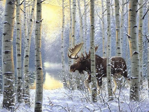лось-зимой-в-березняке