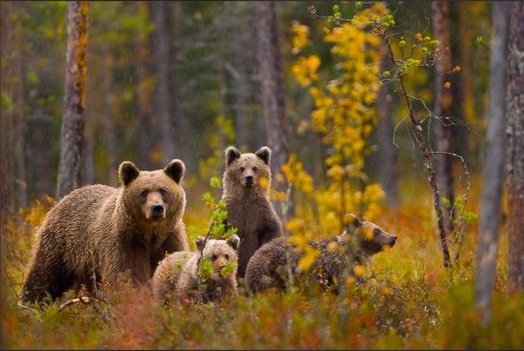 Bear-Parenting-10
