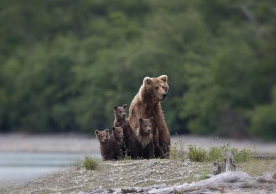 Bear-Parenting-16