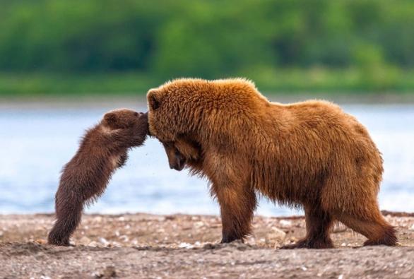 Bear-Parenting-17