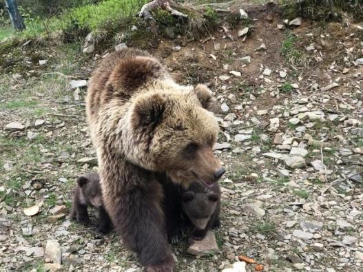Bear-Parenting-2