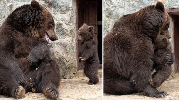 Bear-Parenting-21