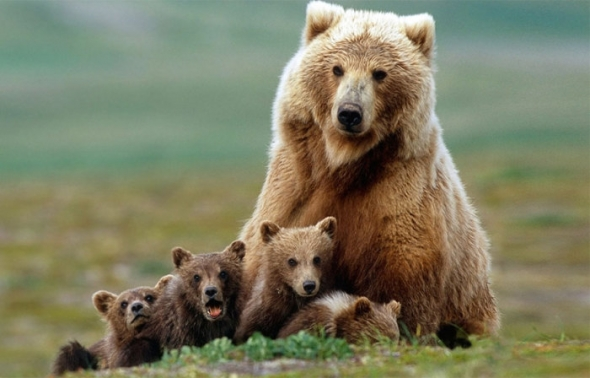Bear-Parenting-24