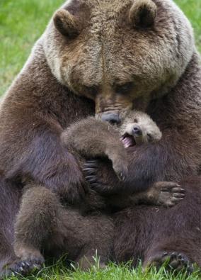 Bear-Parenting-3