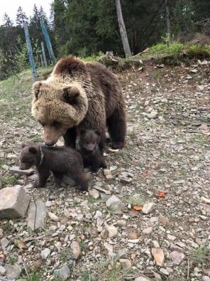 Bear-Parenting-4