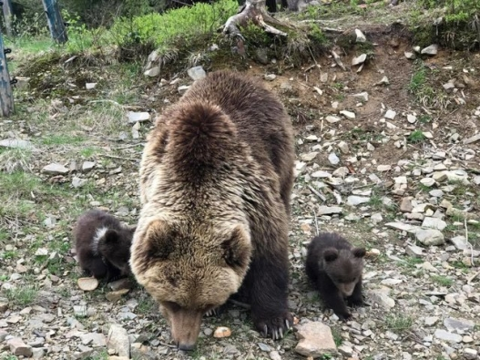 Bear-Parenting-5