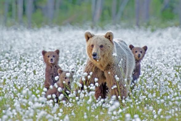 Bear-Parenting-6