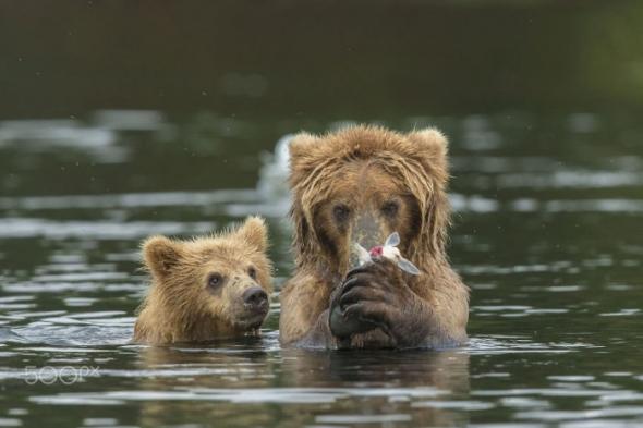 Bear-Parenting-7
