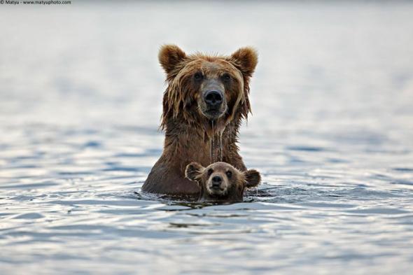 Bear-Parenting-8