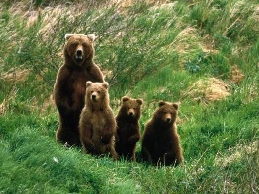 Bear-Parenting-9