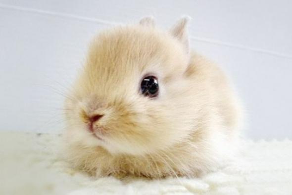 детеныш кролик