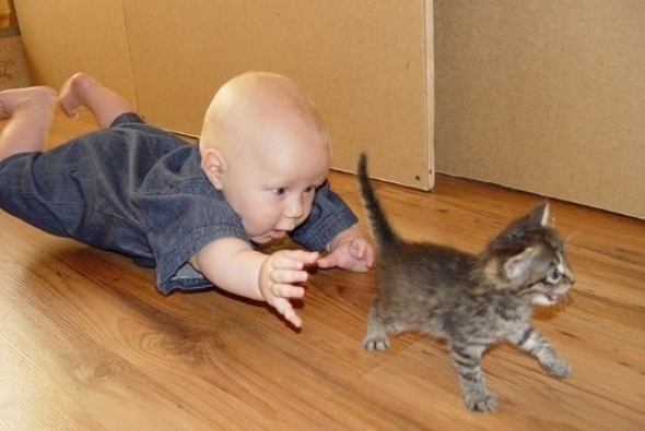 ребенок ловит котенка