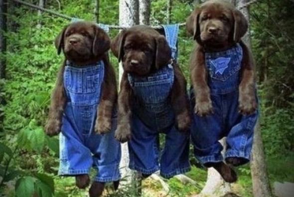 три щенка висят на веревке