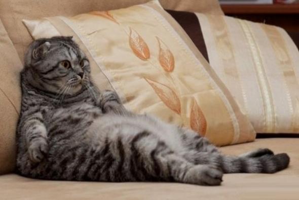 котик обжора