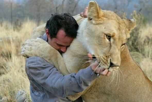 львица обнимает человека