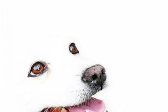 белоснешна собака