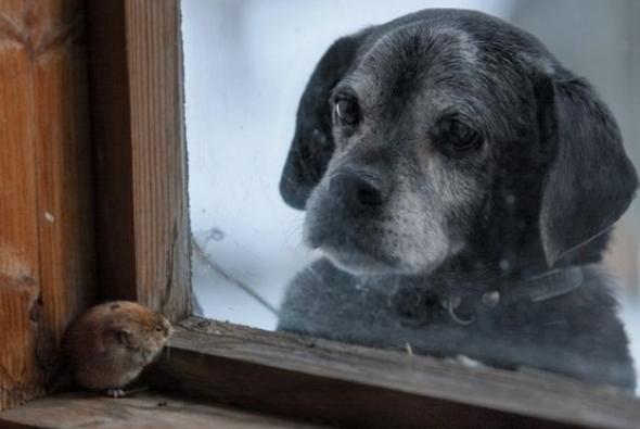 собака на окном