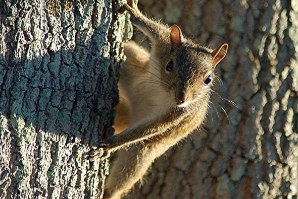фото бельчонка на дереве