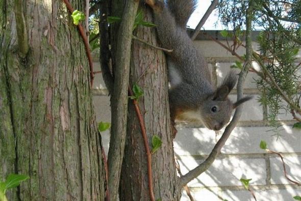 маленькие белочки на дереве фото