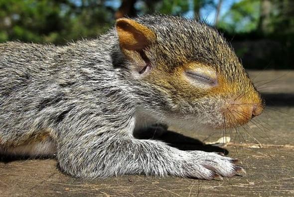 фото маленький бельчонок спит