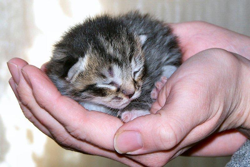 покажи картинки маленьких котят