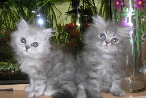 два красивых котенка