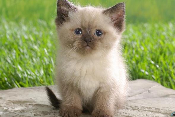 пушистый котик на пеньке
