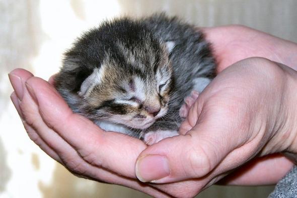 маленький котенок в ладошке