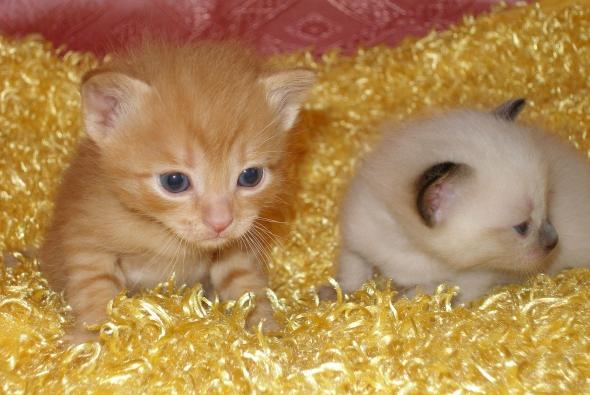 два красивых котика