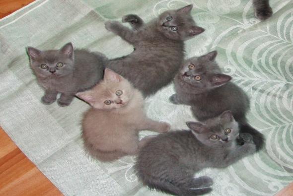 много малышей котят