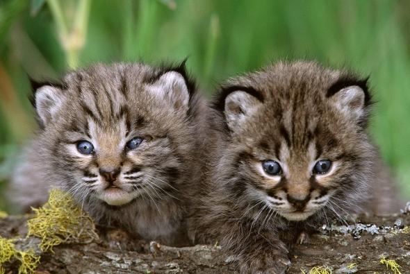 два очень милых котенка