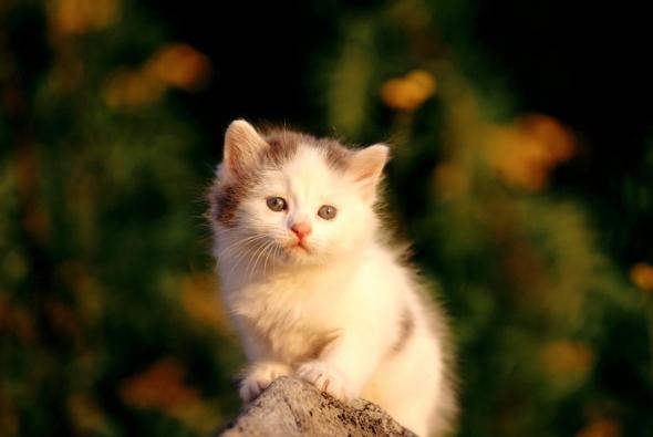котенок в лучах сонца