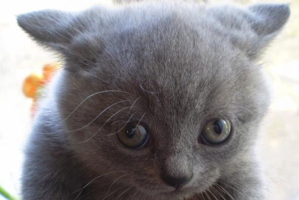 котик подозрительный