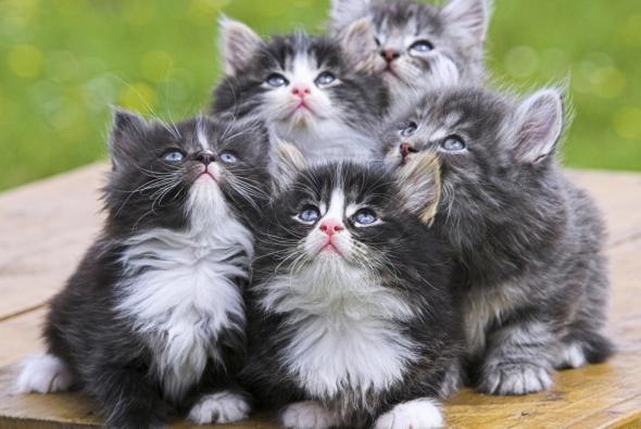котики смотрят на игрушку