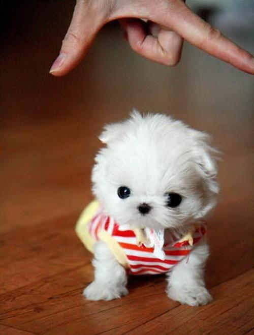 картинки миленьких собачек