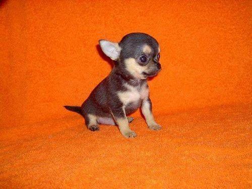 small-dog10