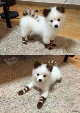 small-dog11