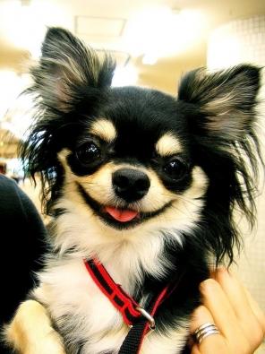 small-dog12