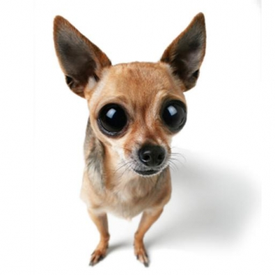 small-dog15