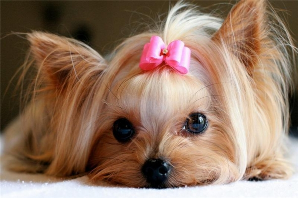 small-dog18