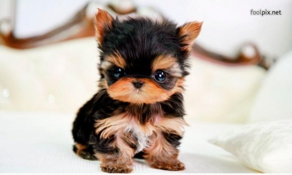 small-dog19