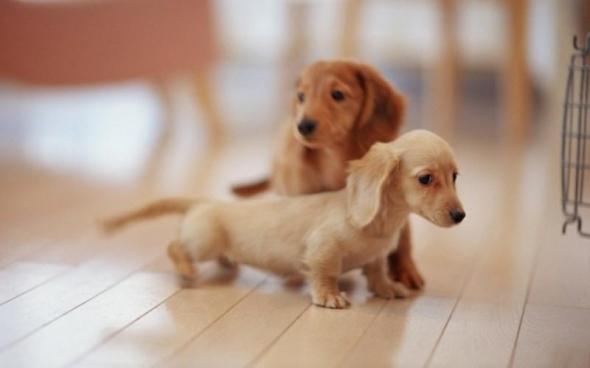 small-dog22