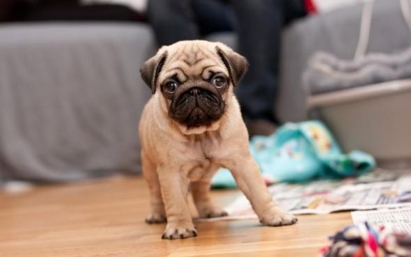 small-dog23
